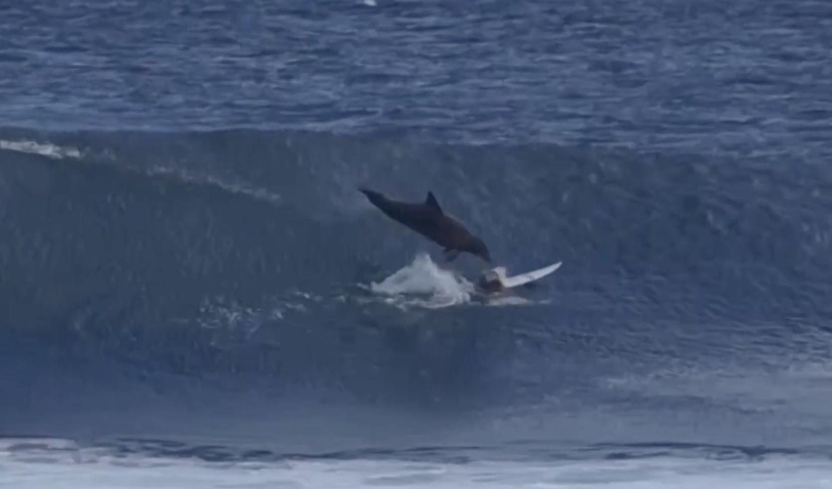 Un jeune surfeur se fait déglinguer par un dauphin