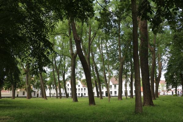 Bruges - Beguinage