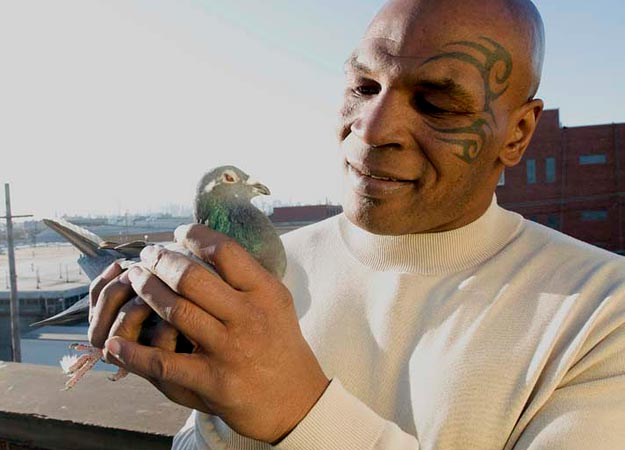 Mike Tyson staredown pigeon