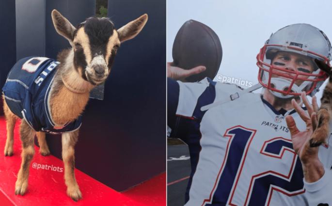 Pour l'anniversaire de Tom Brady, les Patriots ramène des «GOATS»